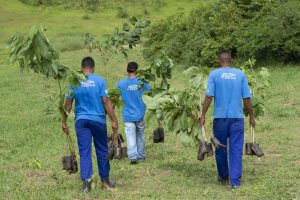Reflorestamento e ressocialização