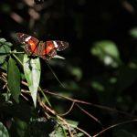 EcoArte apresenta o Caminho de Darwin
